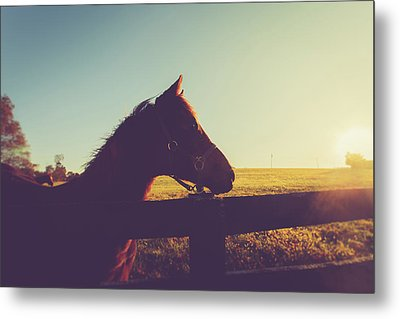 Metal Print featuring the photograph Morning  by Shane Holsclaw
