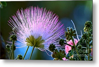 Morning Silk Metal Print