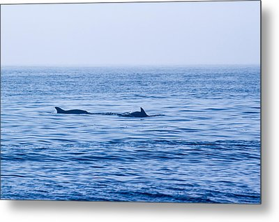 Morning Search For Food Metal Print