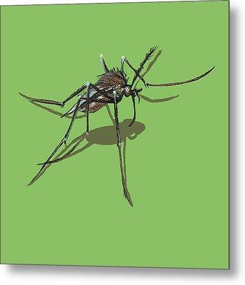 Mosquito Metal Print by Jude Labuszewski