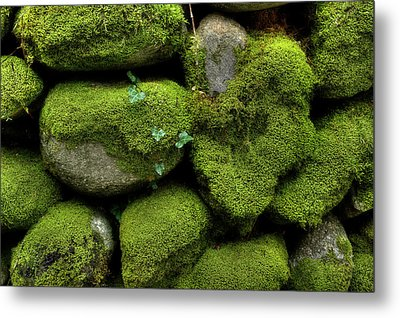 Metal Print featuring the photograph Moss And Ivy by Mike Eingle