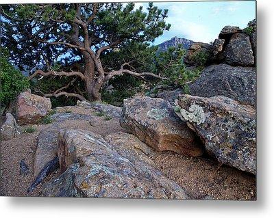 Moss Rocks And A Tree Metal Print by James Steele