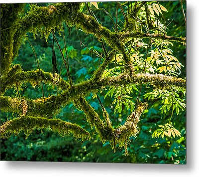 Mossed Metal Print by Alana Thrower