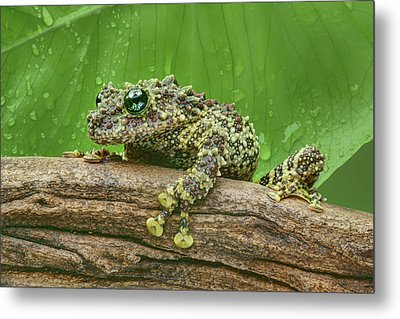 Metal Print featuring the photograph Mossy Frog by Nikolyn McDonald