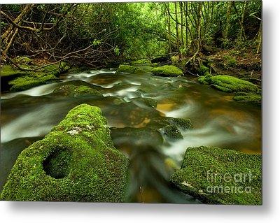 Mossy Rainforest Stream Metal Print by Matt Tilghman