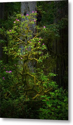Mossy Rhododendron Metal Print