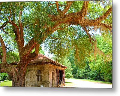 Mossy Tree In Natchez Metal Print