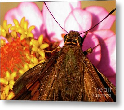 Moth On Pink And Yellow Flowers Metal Print