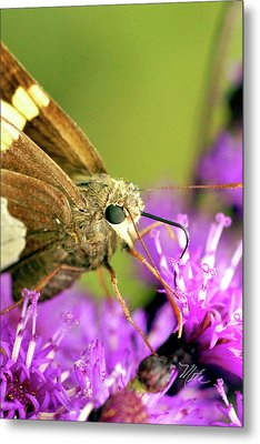 Moth On Purple Flower Metal Print by Meta Gatschenberger