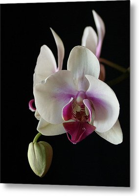 Metal Print featuring the photograph Moth Orchid 2 by Marna Edwards Flavell