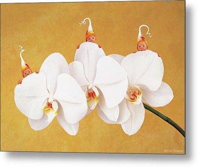 Moth Orchid Metal Print by Anne Geddes