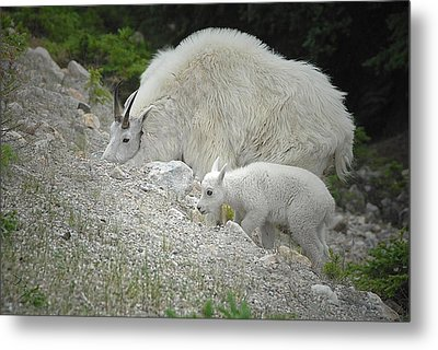 Metal Print featuring the photograph Mother And Baby   by Dyle   Warren
