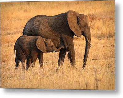 Mother And Baby Elephants Metal Print by Adam Romanowicz