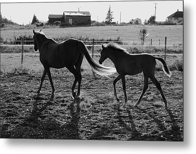 Mother And Baby Metal Print by J D Banks