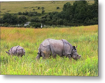 Mother And Baby Rhinos Metal Print