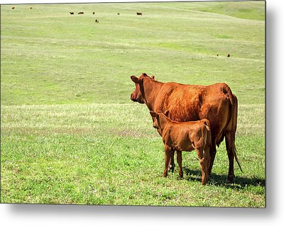 Mother And Daughter Metal Print by Todd Klassy