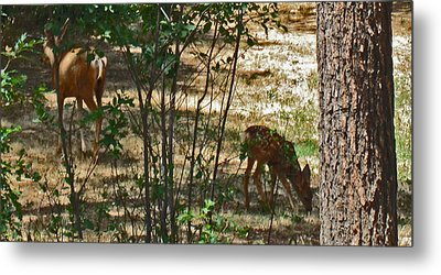 Mother And Fawn Metal Print by Tammy Sutherland