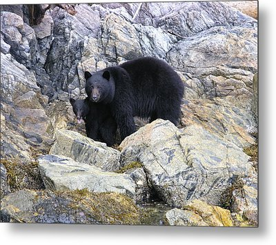 Mother Bear And Her Cub Metal Print