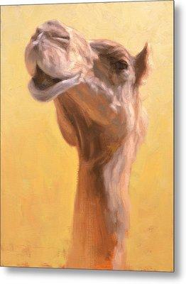 Mother Camel Metal Print by Ben Hubbard