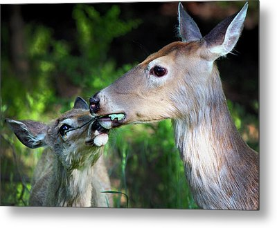 Mother Deer With Fawn Metal Print by Codee Hart