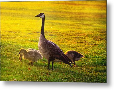 Mother Goose Color Metal Print by Camille Lopez