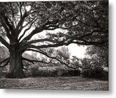 Mother Nature Metal Print by Edward Myers