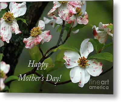 Metal Print featuring the photograph Mother's Day Dogwood by Douglas Stucky