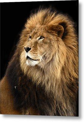 Moufasa The Lion Metal Print by Ann Bridges