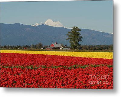Mount Baker Skagit Valley Tulip Festival Barn Metal Print by Mike Reid