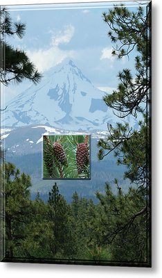 Mount Jefferson With Pines Metal Print by Laddie Halupa