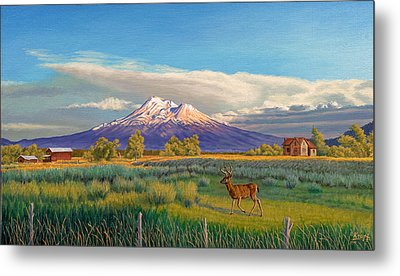 Mount Shasta Metal Print by Paul Krapf
