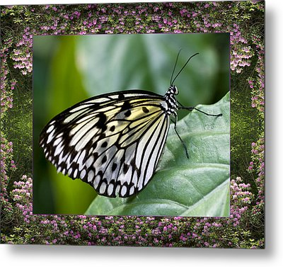 Mountain Butterfly Metal Print by Bell And Todd