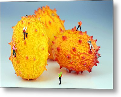 Mountain Climber On Mangosteens Metal Print by Paul Ge