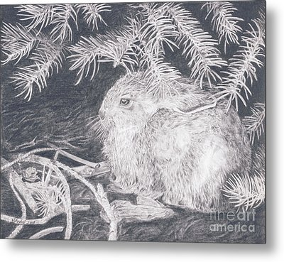 Mountain Cottontail Metal Print by Shevin Childers
