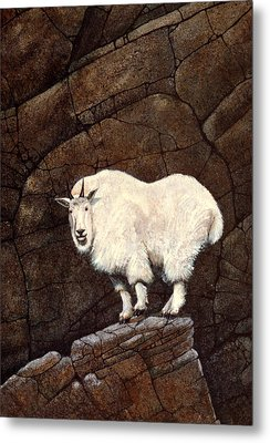 Mountain Goat Metal Print by Frank Wilson