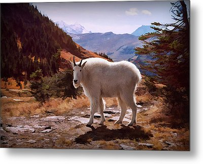 Mountain Goat Metal Print by Patricia Montgomery