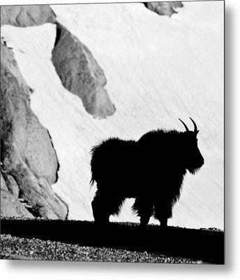 Mountain Goat Shadow Metal Print