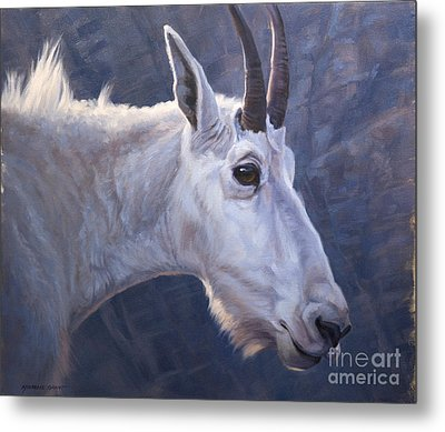 Mountain Goat Study Metal Print by Michelle Grant