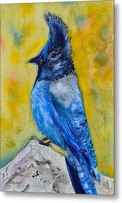 Mountain Jay Metal Print by Beverley Harper Tinsley