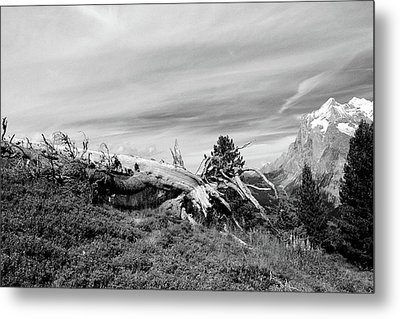 Mountain Landscape With Fallen Tree And View At Alps In Switzerland Metal Print