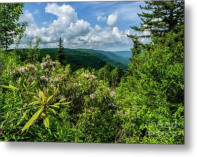 Metal Print featuring the photograph Mountain Laurel And Ridges by Thomas R Fletcher