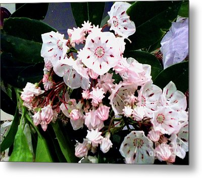 Metal Print featuring the painting Mountain Laurel  by Donna Dixon