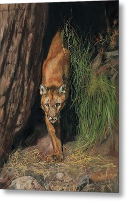 Metal Print featuring the painting Mountain Lion Emerging From Shadows by David Stribbling