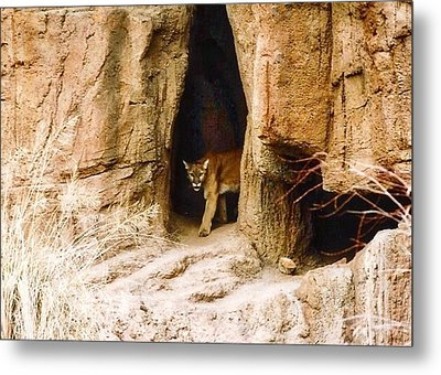Mountain Lion In The Desert Metal Print