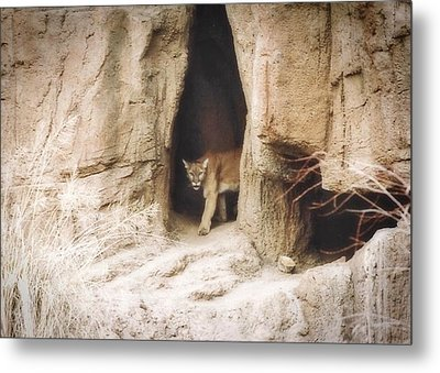 Mountain Lion - Light Metal Print