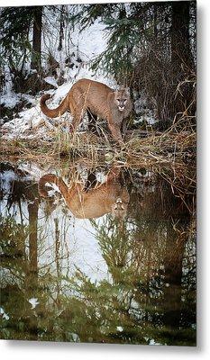 Mountain Lion Reflection Metal Print