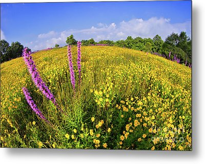 Metal Print featuring the photograph Mountain Of Summer Flowers In The Blue Ridge by Dan Carmichael