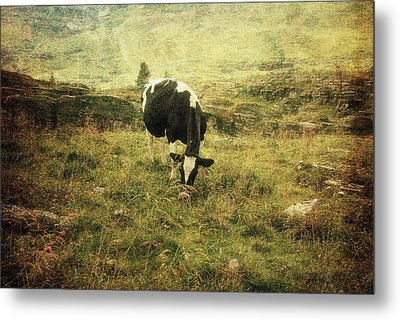 Mountain Pastures  Metal Print