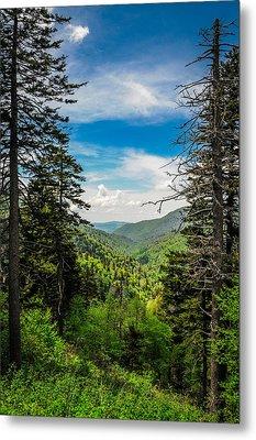 Mountain Pines Metal Print