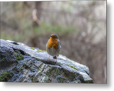 Mountain Robin Metal Print